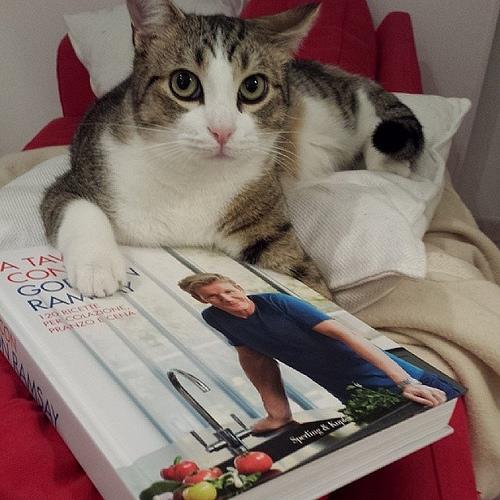 Chef Mario. #gordon #ramsay #kitchen #recipe #book #cat